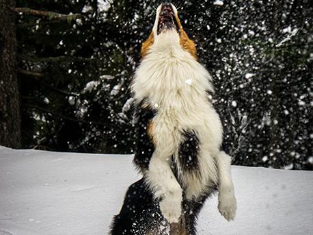 ostopathie-canine